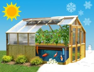 You see an aquaponic greenhouse.